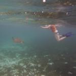 Snorkel_Tobago_18.JPG