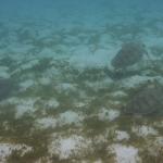 Snorkel_Tobago_19.JPG