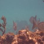 Snorkel_Tobago_II_01.JPG