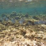 Snorkel_Tobago_II_06.JPG
