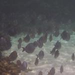 Snorkel_Tobago_II_07.JPG