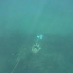 Snorkeling-Purina_01.JPG