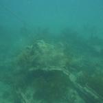 Snorkeling-Purina_02.JPG