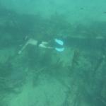 Snorkeling-Purina_06.JPG