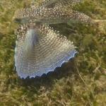 Snorkeling_Mayreau_1.JPG