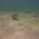 Snorkeling_Mayreau_2_1.JPG