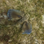 Snorkeling_Mayreau_4_1.JPG
