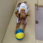 Soccer_Chico_1.JPG