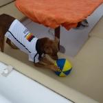 Soccer_Chico_2.JPG