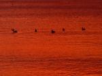 sunsets_bvi_095