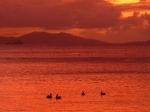 sunsets_bvi_096