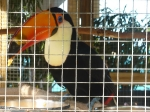 toucan_1