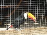 toucan_4