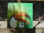 toucan_5