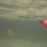Turtle-_Dive_03.JPG