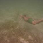 Turtle-_Dive_06.JPG