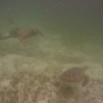 Turtle-_Dive_10.JPG