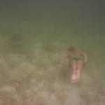 Turtle-_Dive_11.JPG