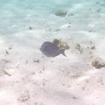 Underwater-TobagoCays_01.JPG