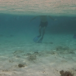 Underwater-TobagoCays_02.JPG