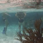 Underwater-TobagoCays_03.JPG
