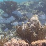 Underwater-TobagoCays_04.JPG