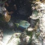 Underwater-TobagoCays_06.JPG