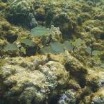 Underwater-TobagoCays_07.JPG