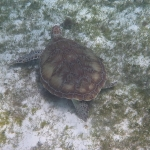 Underwater-TobagoCays_11.JPG