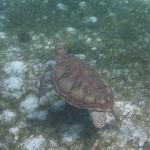 Underwater-TobagoCays_12.JPG