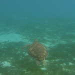 Underwater-TobagoCays_13.JPG