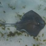 Underwater-TobagoCays_14.JPG