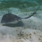 Underwater-TobagoCays_16.JPG