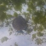 Underwater-TobagoCays_19.JPG