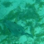 Underwater_02.JPG
