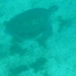 Underwater_03.JPG