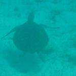 Underwater_04.JPG