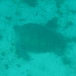 Underwater_05.JPG