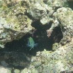Underwater_08.JPG