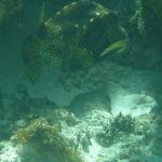 Underwater_09.JPG