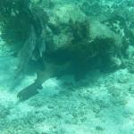 Underwater_11.JPG