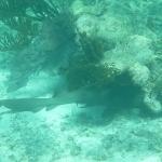 Underwater_12.JPG