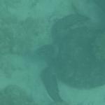 UnderwaterChatham_2.JPG