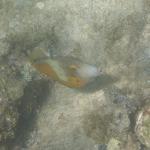 UnderwaterChatham_3.JPG