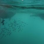 UnderwaterChatham_5.JPG