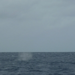 Whales-Canuoan_2.JPG