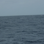 Whales-Canuoan_3.JPG